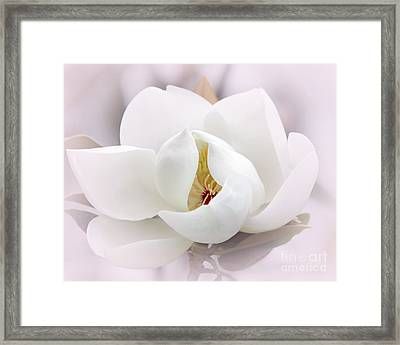 Beautiful Magnolia Bloom Framed Print by Sabrina L Ryan