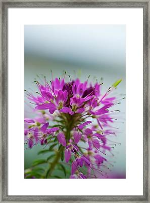 Framed Print featuring the photograph Beautiful Morning by Kevin Bone