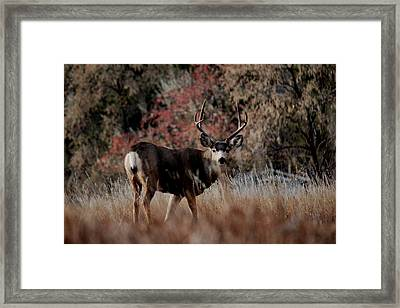 Beautiful Muley Framed Print