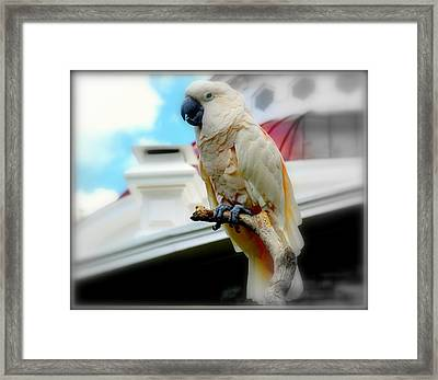 Beautiful Salmon-crested Cockatoo Framed Print