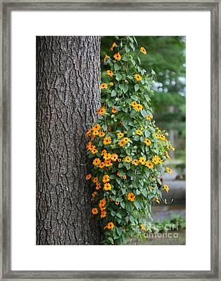Beautiful Orange Hanging Flowers Framed Print