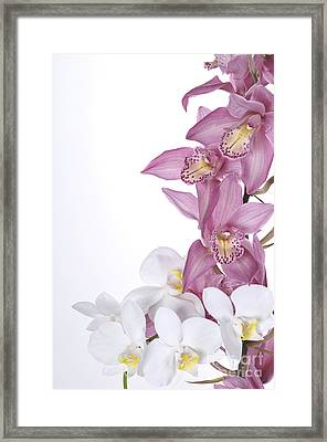 Beautiful Orchid Pink Framed Print by Boon Mee