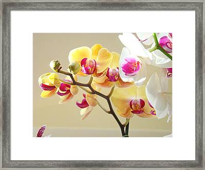 Beautiful Orchids Floral Art Prints Orchid Flowers Framed Print