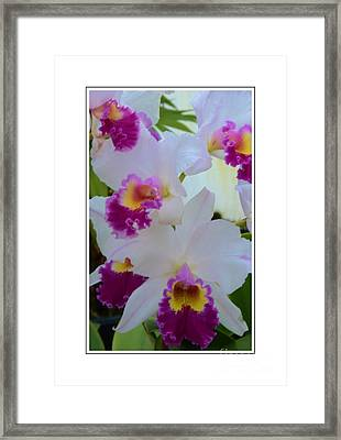 Beautiful Orchids Framed Print by Kathleen Struckle