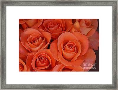 Beautiful Peach Roses 2 Framed Print by Carol Lynch