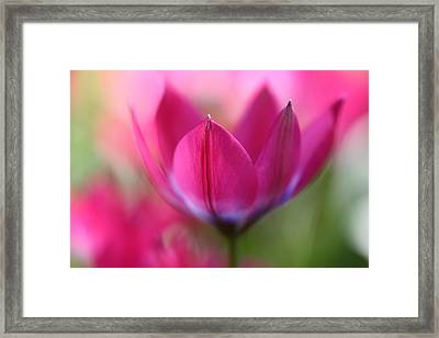 Beautiful Pink Framed Print