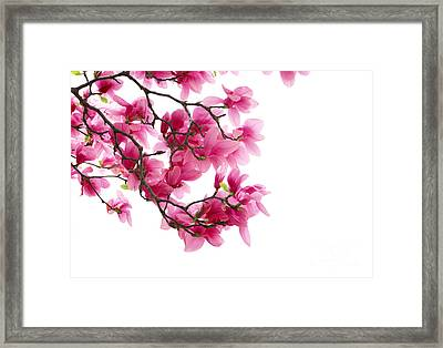Beautiful Pink Flower Framed Print by Boon Mee