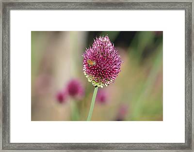 Beautiful Pink Flower With Bee Framed Print