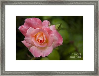 Shades Of Pink And Green Framed Print