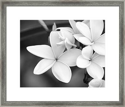 Beautiful Plumeria In Black And White Framed Print