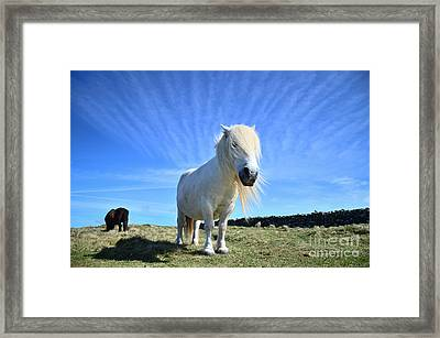 Beautiful Poney Grazing Near The Lizard - Cornwall Framed Print by OUAP Photography