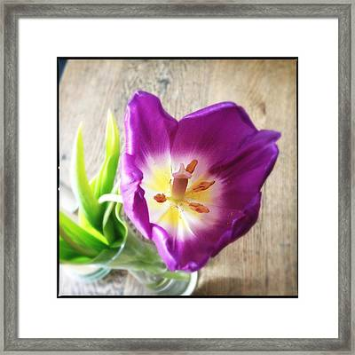 Beautiful Purple Flower From Above Framed Print