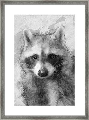 Beautiful Raccoon Framed Print