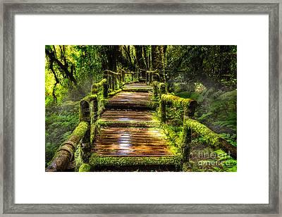 Beautiful Rain Forest At Ang Ka Nature Trail  Framed Print