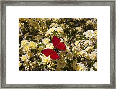 Beautiful Red Butterfly Framed Print by Garry Gay