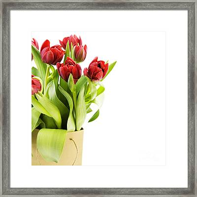 Beautiful Red Flower Framed Print by Boon Mee