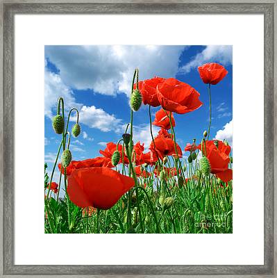 Beautiful Red Poppies Framed Print by Boon Mee