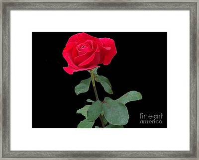 Beautiful Red Rose Framed Print by Janette Boyd