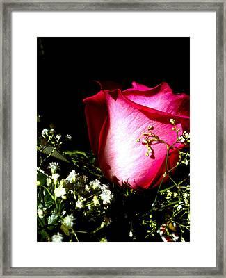 Beautiful Rose Framed Print by Elizabeth Fredette