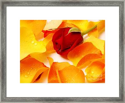Beautiful Roses Valentine Framed Print by Boon Mee