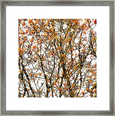 Beautiful Rowan 10 - Square Framed Print