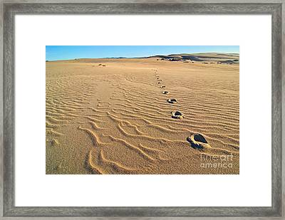 Beautiful Sand Dunes Of The Rancho Guadalupe Dunes Preserve In California Framed Print by Jamie Pham