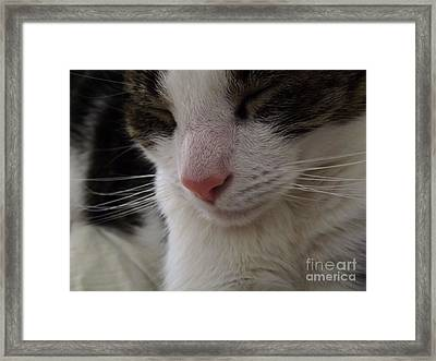 Framed Print featuring the photograph Beautiful Slumber by Robyn King