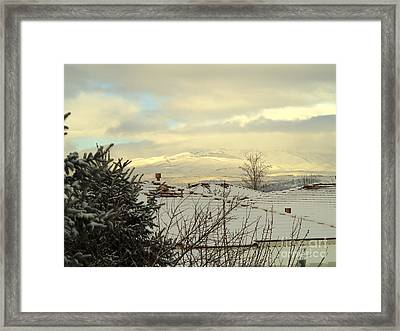 Beautiful Sparkling Snow Framed Print by Phyllis Kaltenbach