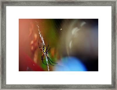 Beautiful Spider Framed Print by Adam LeCroy