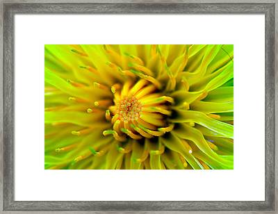 Beautiful Spring Flowers Framed Print