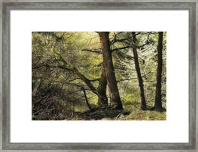 Beautiful Spring Trees Framed Print