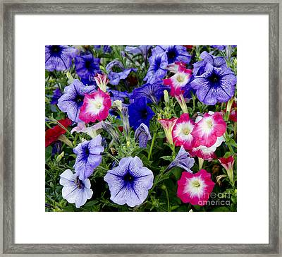 Beautiful Summer Annuals Framed Print by Wilma  Birdwell
