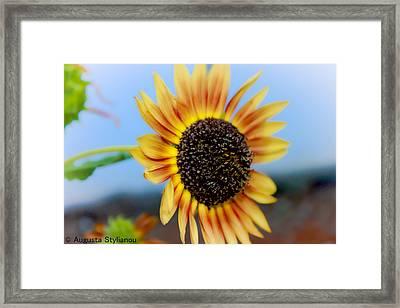 Beautiful Sunflower Framed Print by Augusta Stylianou