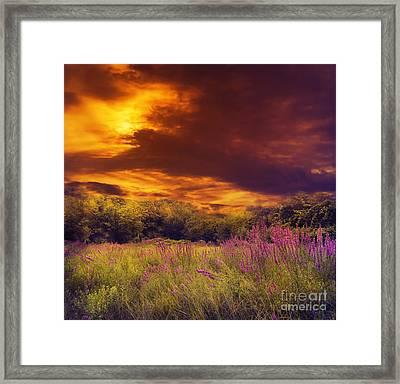 Beautiful Sunset Framed Print by Jelena Jovanovic