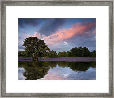 Beautiful Sunset Over Lavender Field Reflected In Calm Lake Wate Framed Print by Matthew Gibson