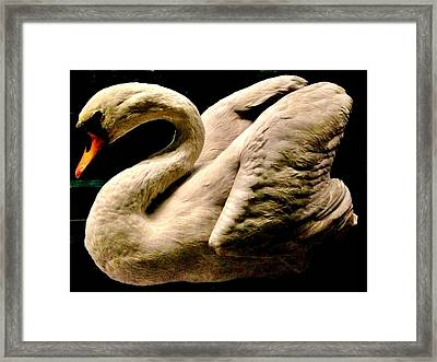 Beautiful Swan 331 Framed Print
