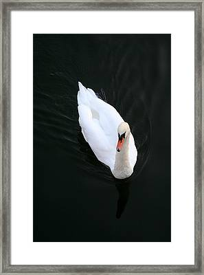 Beautiful Swan Framed Print by Allan Millora