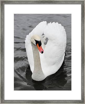 Framed Print featuring the photograph Beautiful Swan by Tiffany Erdman