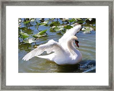 Beautiful Swan Wings Framed Print