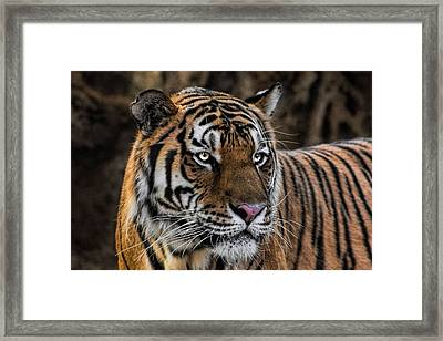 Framed Print featuring the photograph Beautiful Tiger Photograph by Tracie Kaska