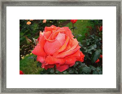 Beautiful To Behold Framed Print by Lizbeth Bostrom
