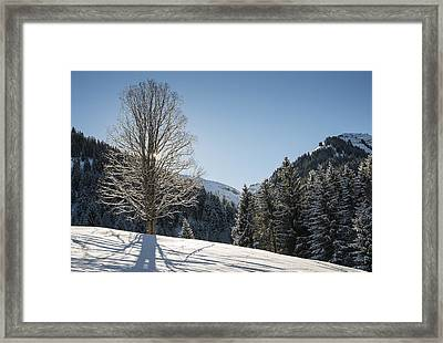 Beautiful Tree In Snowy Landscape On A Sunny Winter Day Framed Print