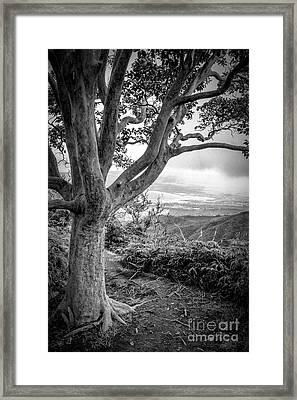 Beautiful Tree Looking Down On A Tropical Valley Framed Print