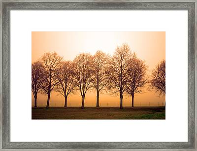 Beautiful Trees In The Fall Framed Print by Tommytechno Sweden