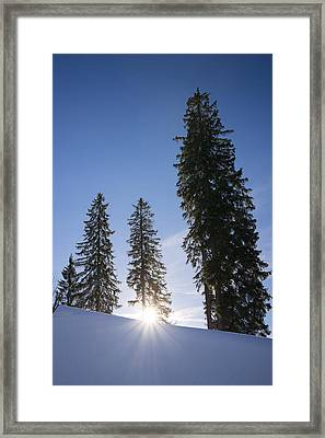 Beautiful Trees On A Sunny Winter Day Framed Print by Matthias Hauser