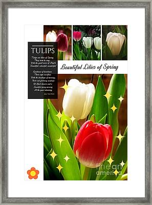 Beautiful Tulip Series 1 Framed Print