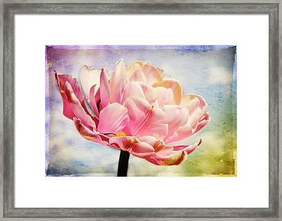 Framed Print featuring the photograph Beautiful Tulip by Trina  Ansel