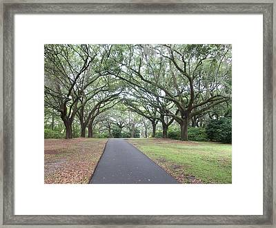 Beautiful View At Charles Towne Landing Framed Print by Dylan Lamb