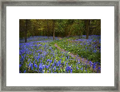 Beautiful Walk Through Framed Print by Svetlana Sewell