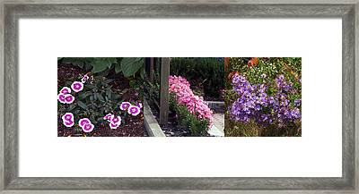 Beautiful Walkways Blossom Flowers Adorn Excite Smile Spread Happiness Nature Natural  Framed Print by Navin Joshi